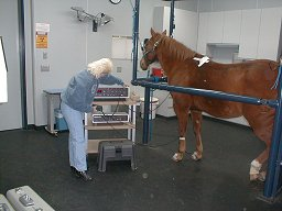 Joyce Jackson in Veterinary Clinic