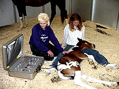Colt, Missy, being treated with the Animal Calibrated Acuscope equipment